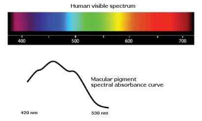 anti-glare computer eye strain diet-macular pigment peak absorption
