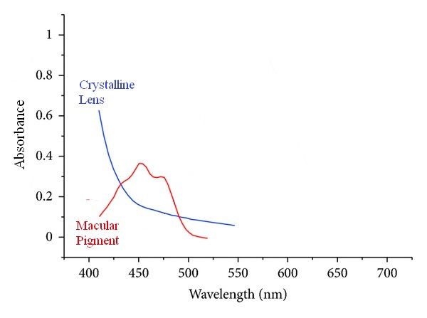 blue filter - crystalline lens and macular pigment absorption curves