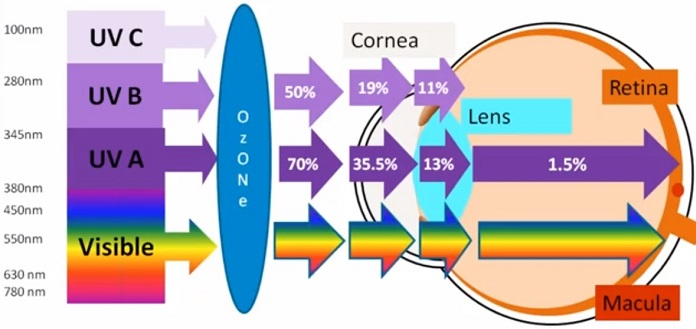 macular degeneration glasses - proportion of UV and visible light light reaching the retina